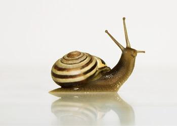Soin cosmétique à la bave d'escargot