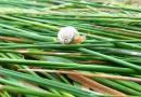 La bave d'escargot : le nouvel ingrédient de vos cosmétiques ?